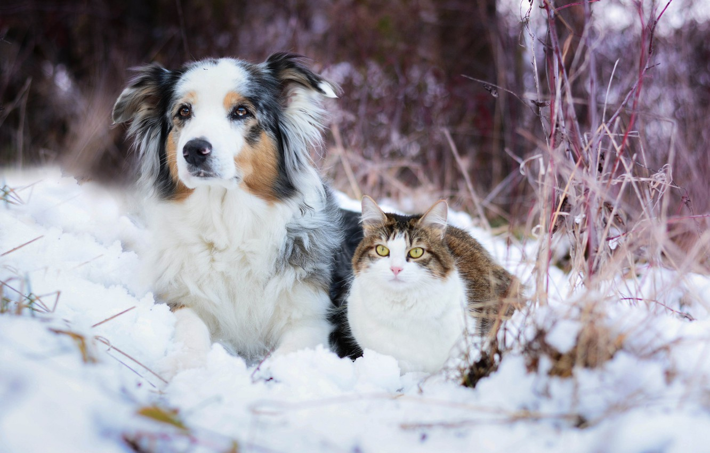 Photo wallpaper winter, cat, snow, dog