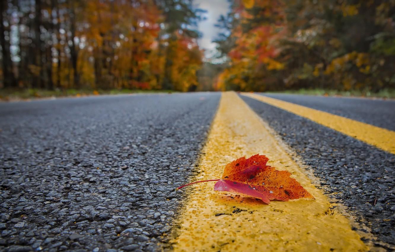 Photo wallpaper road, autumn, sheet
