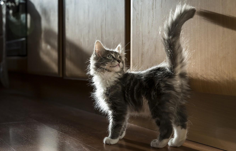Photo wallpaper fluffy, tail, kitty