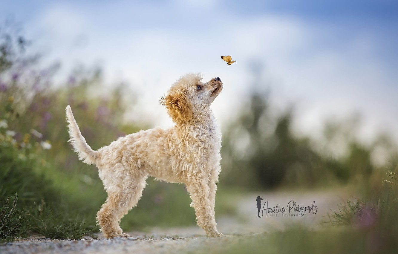 Photo wallpaper nature, butterfly, dog