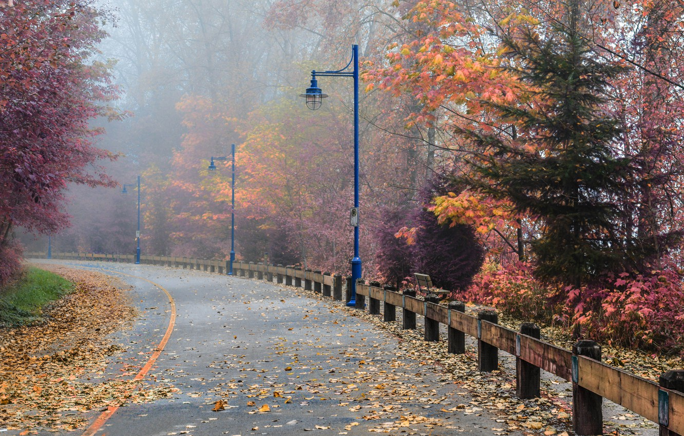 Wallpaper Road Fog Autumn Street Canada Lights Canada Fall Foliage Autumn Colors Road Fog Falling Leaves Leaves Port Richmond Images For Desktop Section Priroda Download