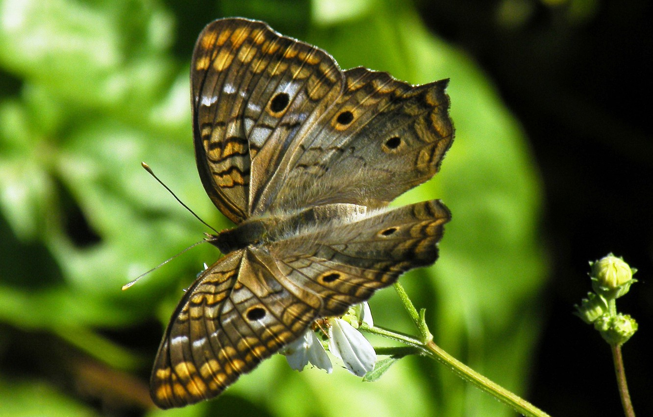 Photo wallpaper nature, butterfly, wings, moth