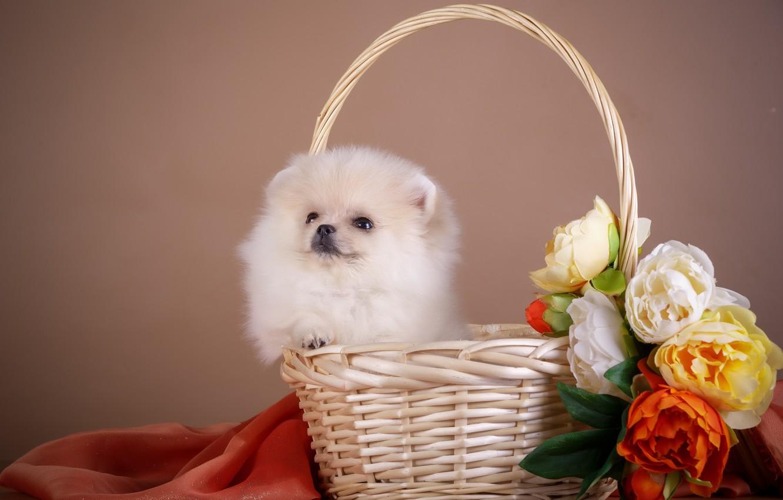 Photo wallpaper flowers, basket, puppy, fabric
