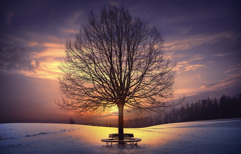 Photo wallpaper winter, sunset, tree, bench