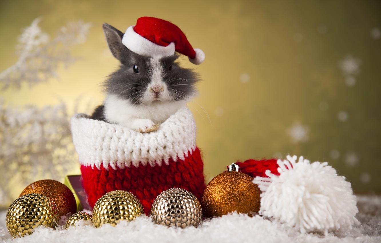 Photo wallpaper holiday, toys, new year, rabbit, bag