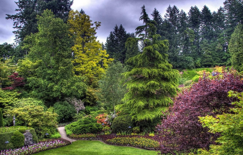 Photo wallpaper trees, Park, beauty