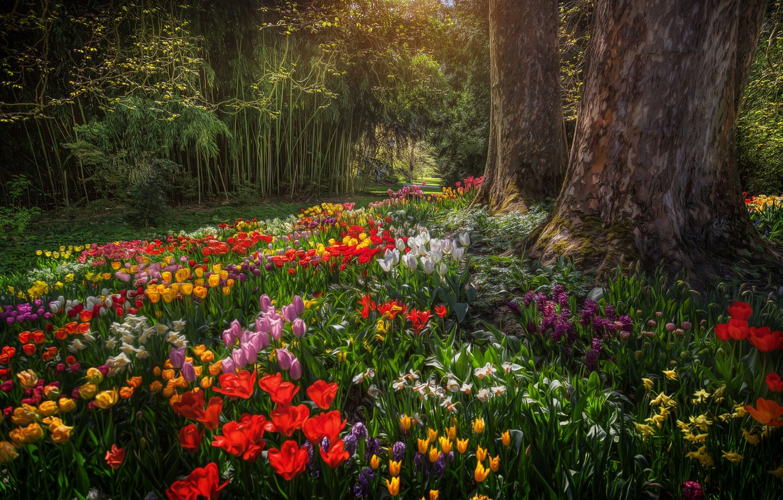 Photo wallpaper trees, flowers, Park, Germany, tulips, Germany, daffodils, Baden-Württemberg, Baden-Württemberg, Mainau, Mainau island