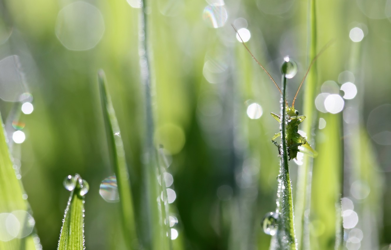 Photo wallpaper nature, background, grasshopper