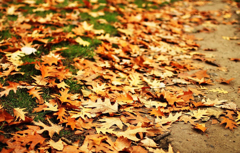 Photo wallpaper autumn, leaves, oak