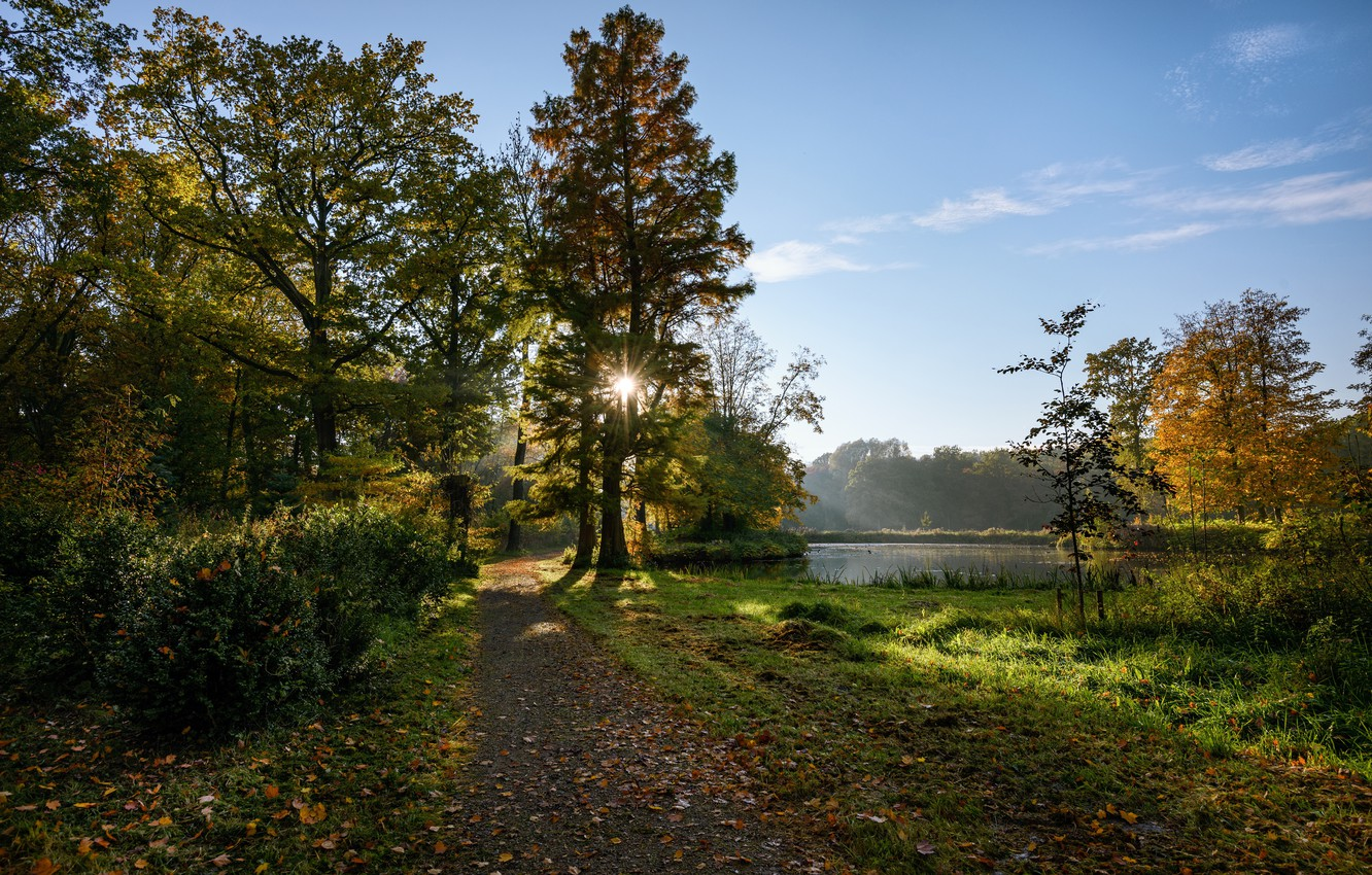 Photo wallpaper autumn, forest, the sky, grass, leaves, the sun, rays, trees, pond, Park, Netherlands, path, the …