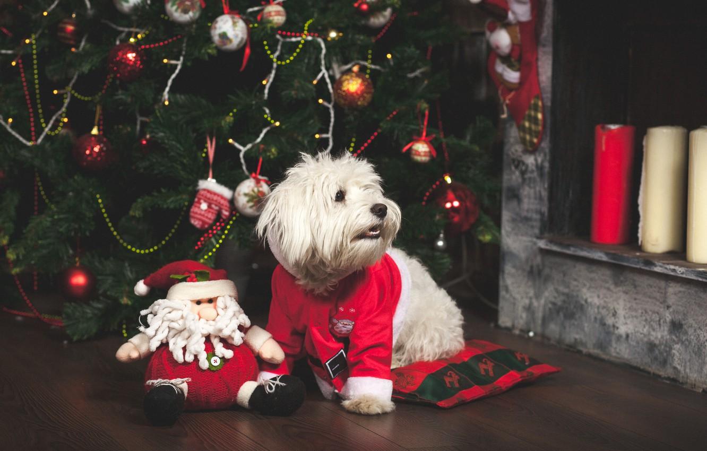 Photo wallpaper toys, tree, dog, New Year, Christmas, Christmas, dog, 2018, Merry Christmas, Xmas, funny, cute, decoration, …