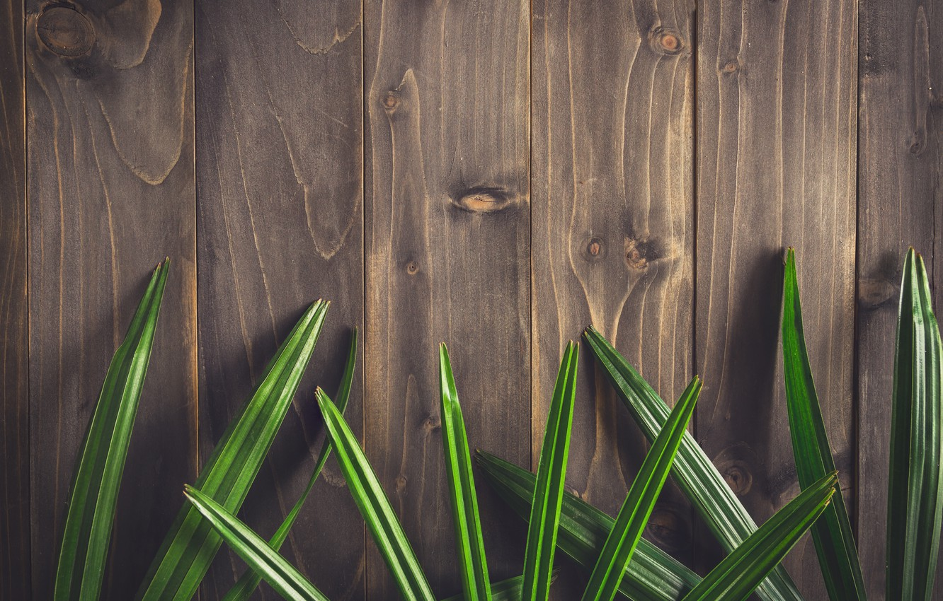 Photo wallpaper leaves, background, tree, Board, wood, texture, leaves