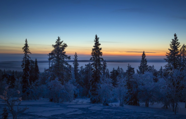 Photo wallpaper winter, forest, snow, sunset