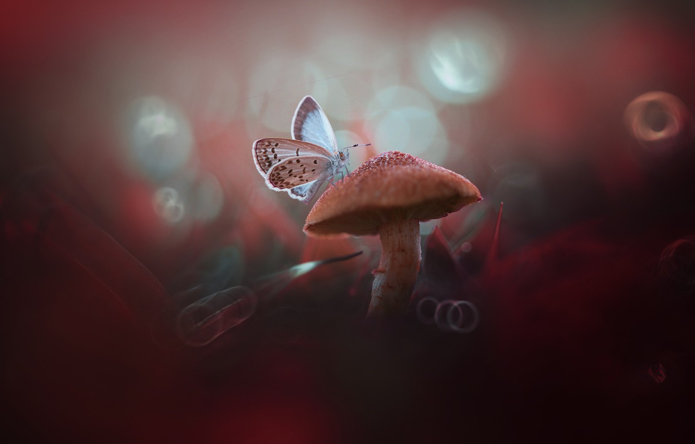 Photo wallpaper macro, butterfly, mushroom, bokeh, mushroom