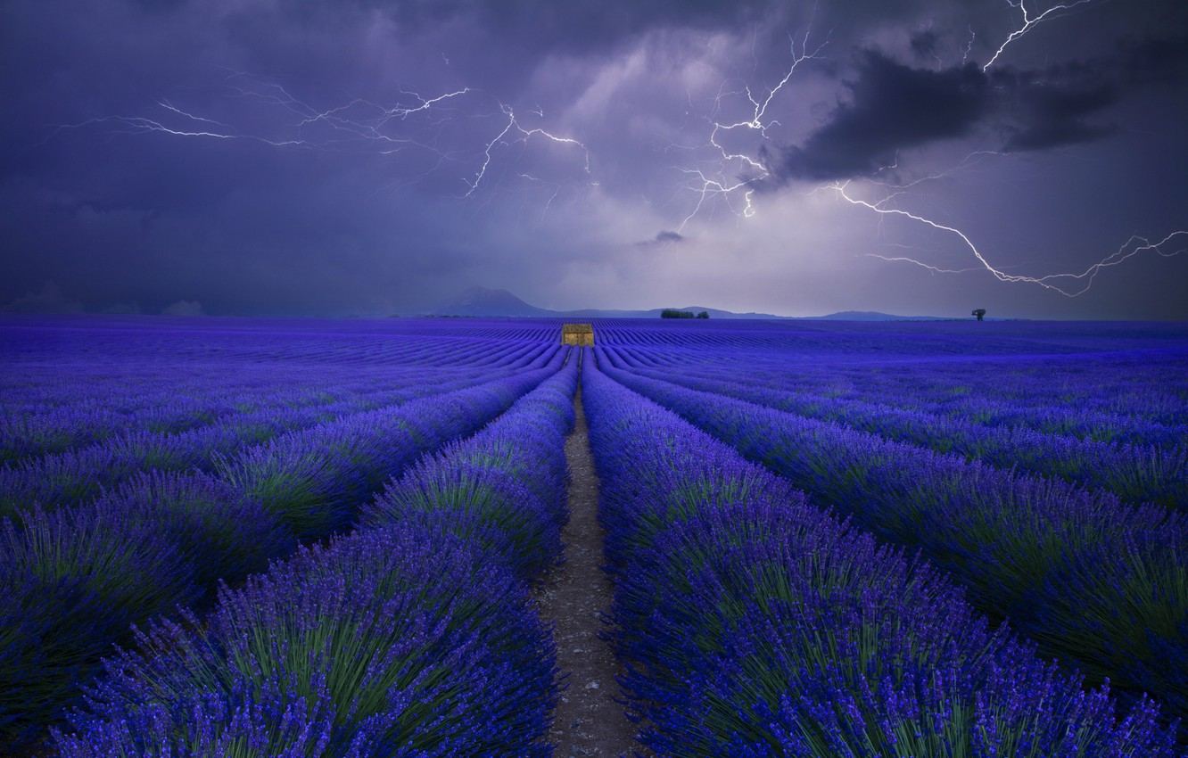 Photo wallpaper field, the sky, clouds, zipper, lavender