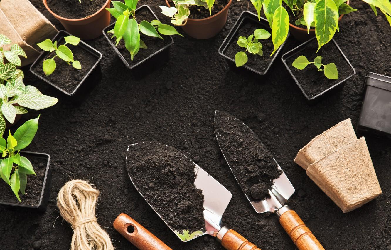 Wallpaper Plants Tools Gardening Sparks Soil Images For Desktop Section Raznoe Download