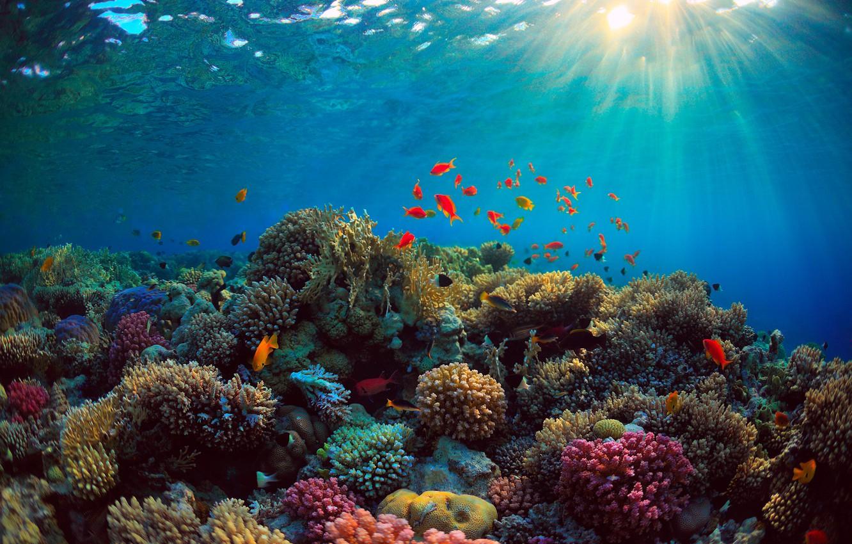 Photo wallpaper sea, fish, blue, the bottom, corals, rays of light, Underwater world