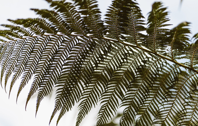 Photo wallpaper leaves, green, fern