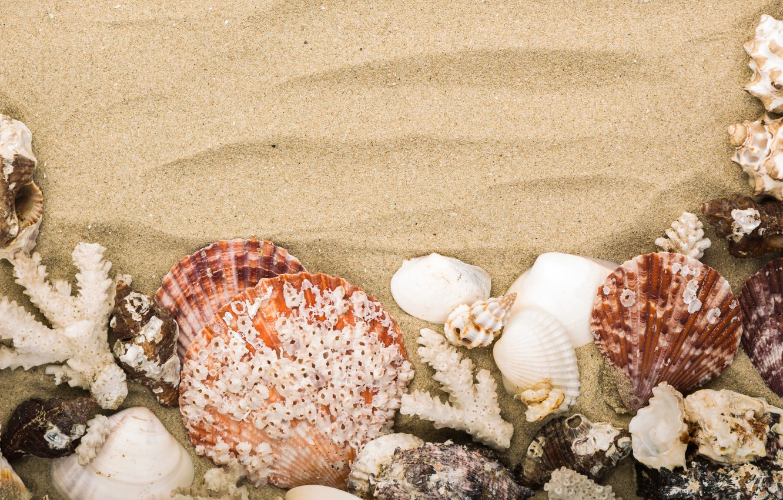 Photo wallpaper sand, beach, nature, shell, Mare