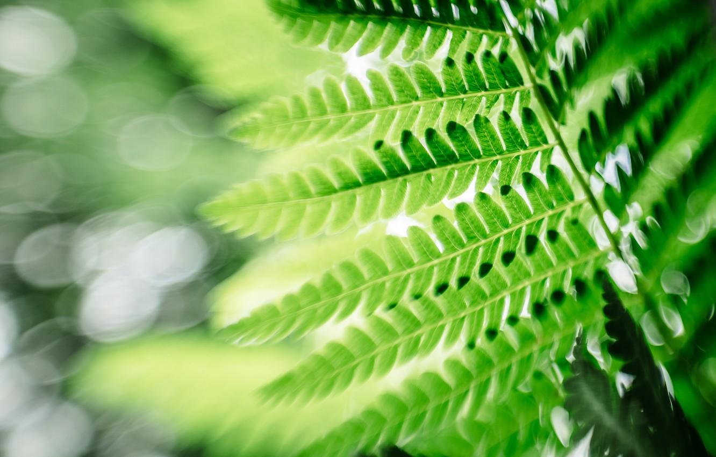 Photo wallpaper leaves, macro, sheet, green