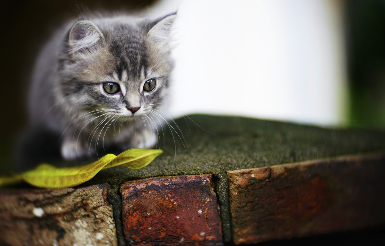 Photo wallpaper kitty, background, eyes, cute
