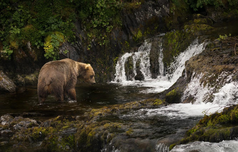 Photo wallpaper river, Alaska, cascade, Brown bear, Kodiak