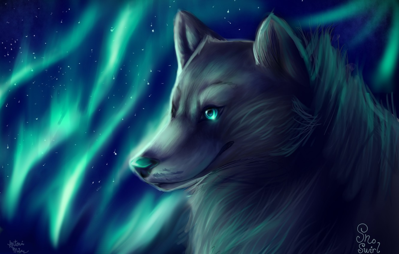 Photo wallpaper wolf, Northern lights, by SnoSwirl