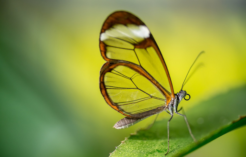 Photo wallpaper macro, sheet, butterfly