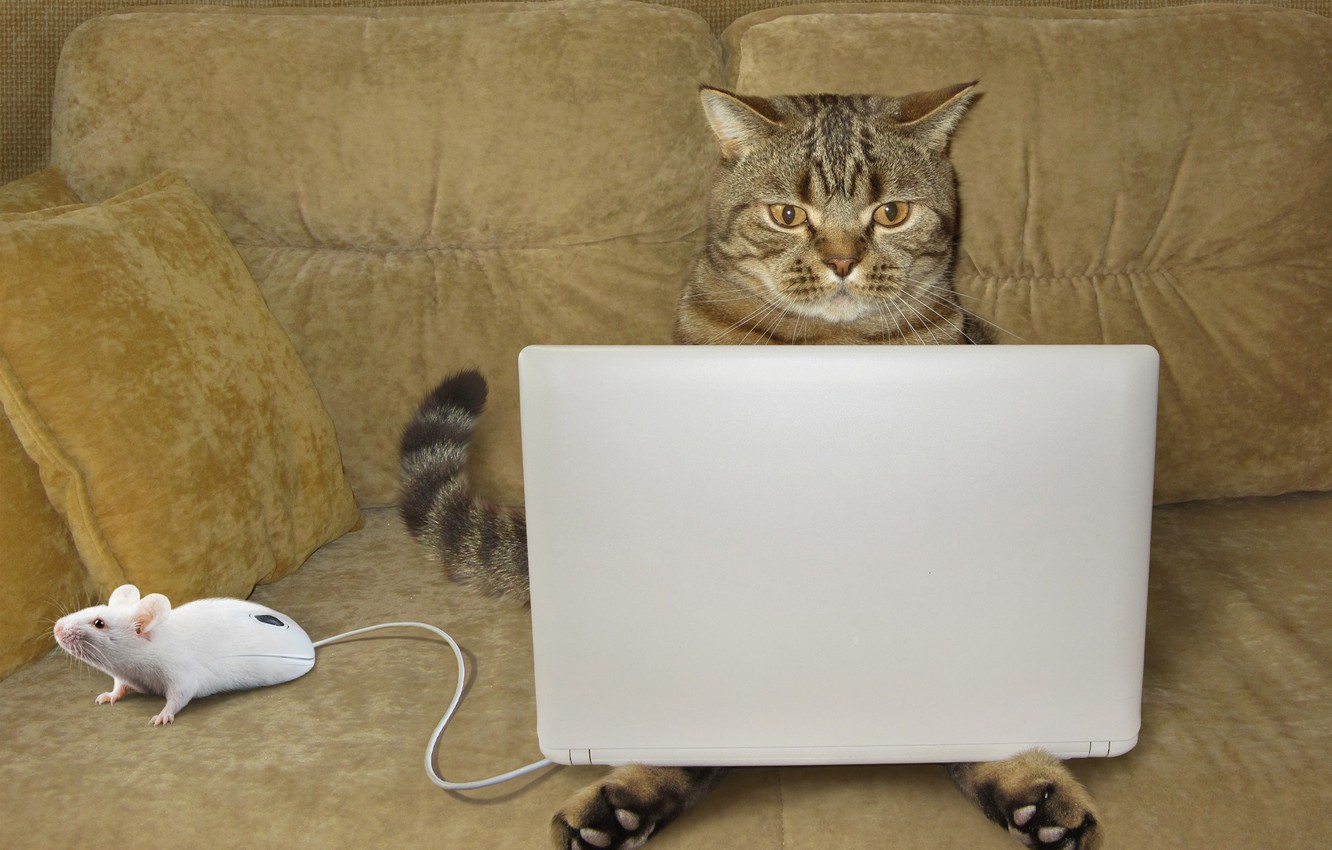 Photo wallpaper cat, mouse, laptop
