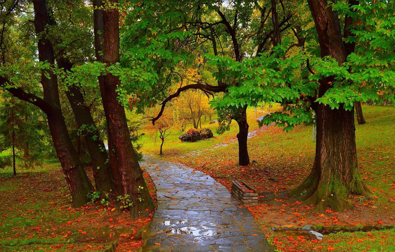 osen dorozhka park dozhd luzha autumn fall rain park path