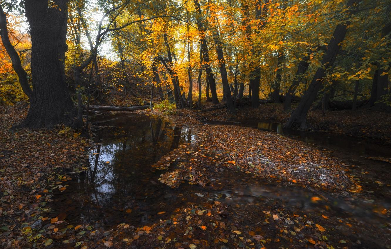 Photo wallpaper autumn, forest, water, trees, stream, foliage, Orenburzhye