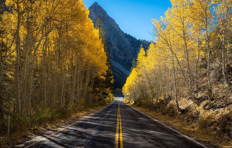 Photo wallpaper road, autumn, mountain, birch