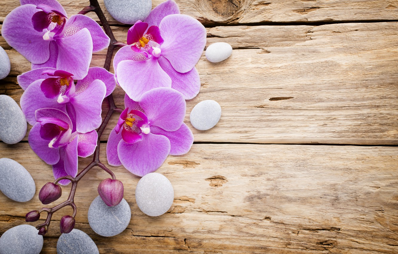 Photo wallpaper stones, wood, Orchid, pink, flowers, orchid