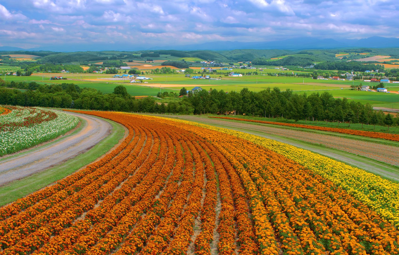 Photo wallpaper field, flowers, China, village, field, flowers, country, china