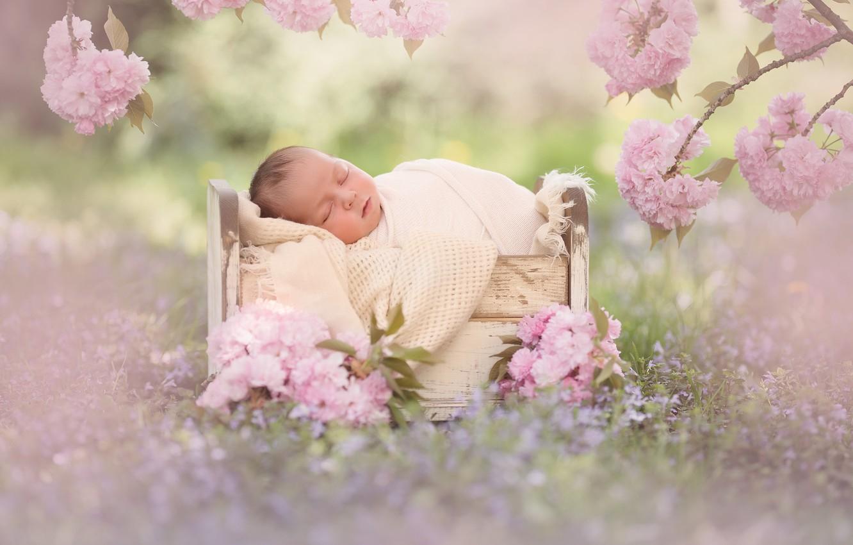 Photo wallpaper flowers, branches, sleep, Sakura, baby, flowering, baby, cot, sleep