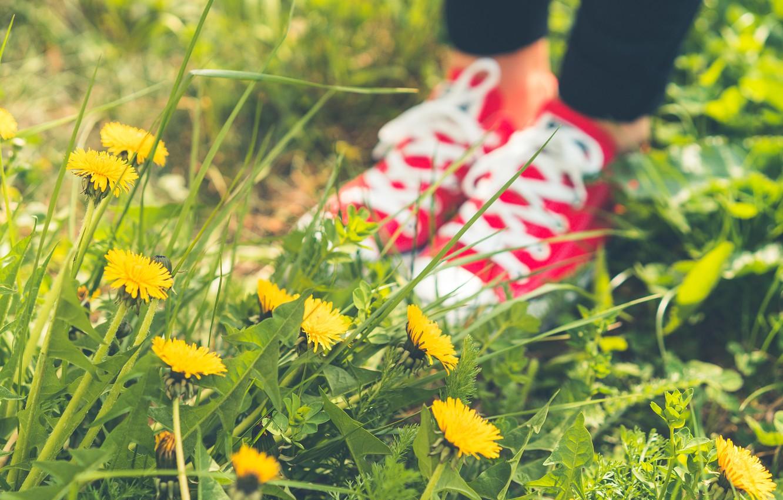 Photo wallpaper summer, grass, shoes, sneakers, pink, dandelions