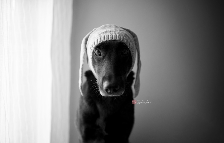 Photo wallpaper look, hat, dog