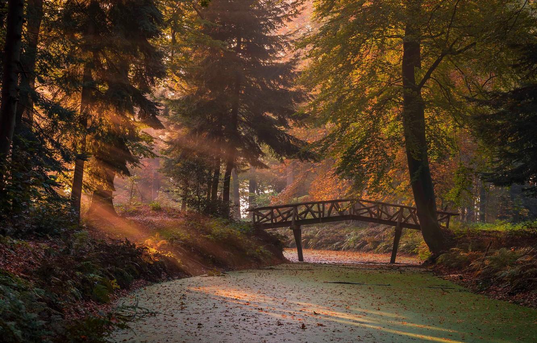 Photo wallpaper autumn, forest, the sun, rays, light, branches, bridge, fog, Park, trunks, vegetation, foliage, morning, ate, …