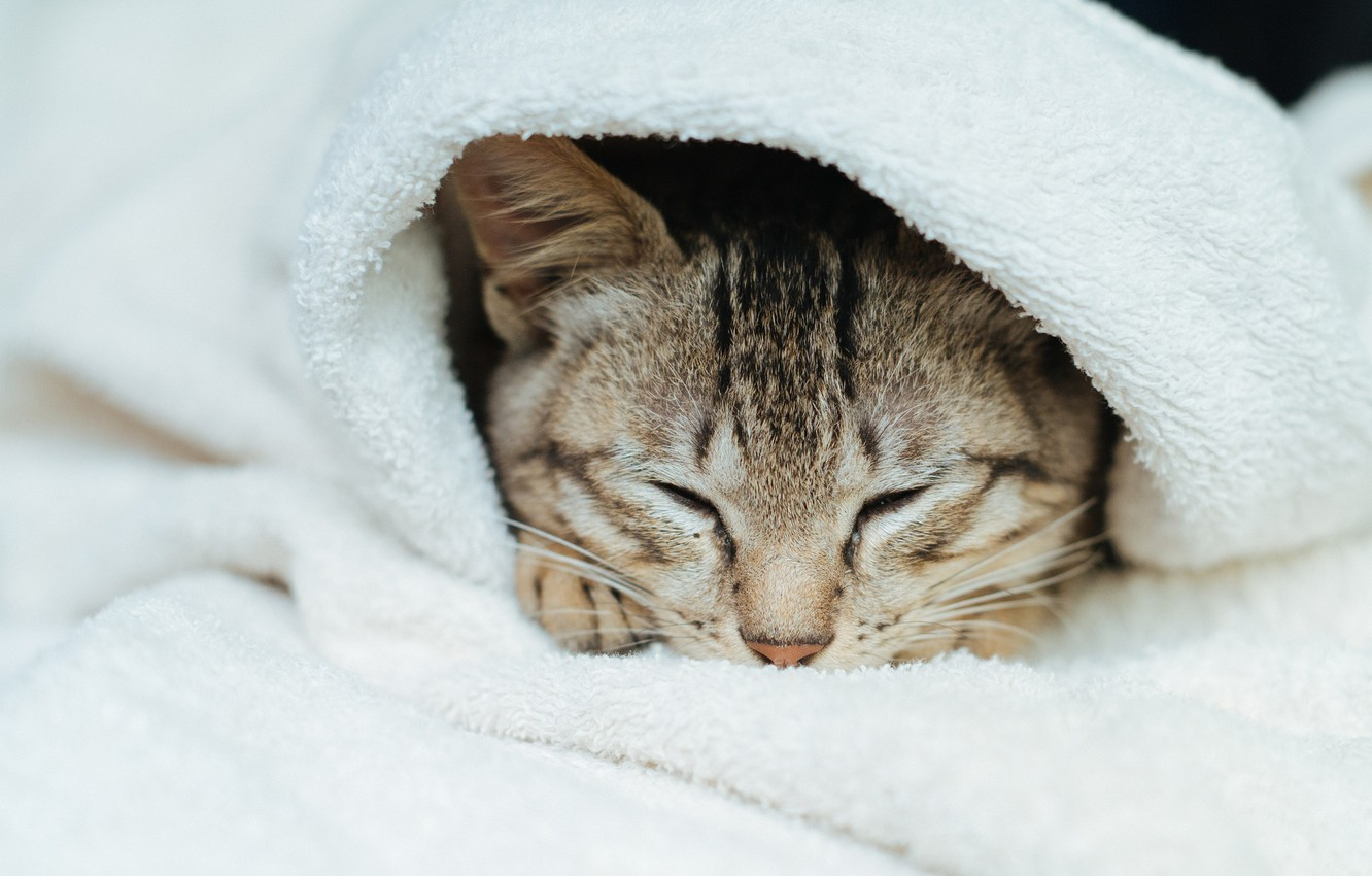 Photo wallpaper cat, cat, sleeping