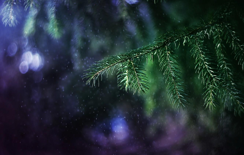 Photo wallpaper light, branches, rain, tree, branch, bokeh