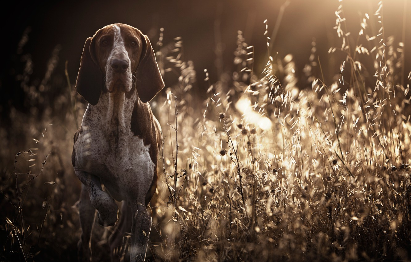 Photo wallpaper grass, dog, bokeh