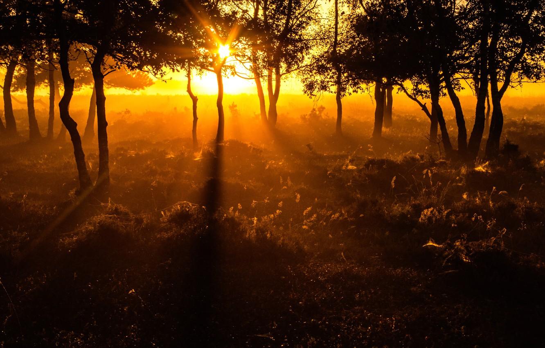 Photo wallpaper the sun, trees, Netherlands, The sun's rays, Morning light, Morning light
