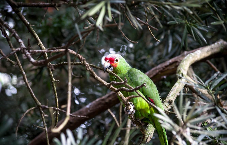Photo wallpaper bird, Tree, parrot, Ara
