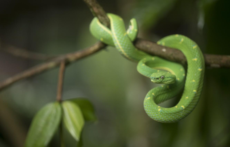 Photo wallpaper nature, snake, Branch, green