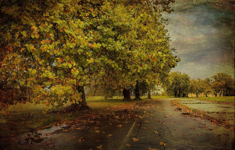 Photo wallpaper road, autumn, tree, texture