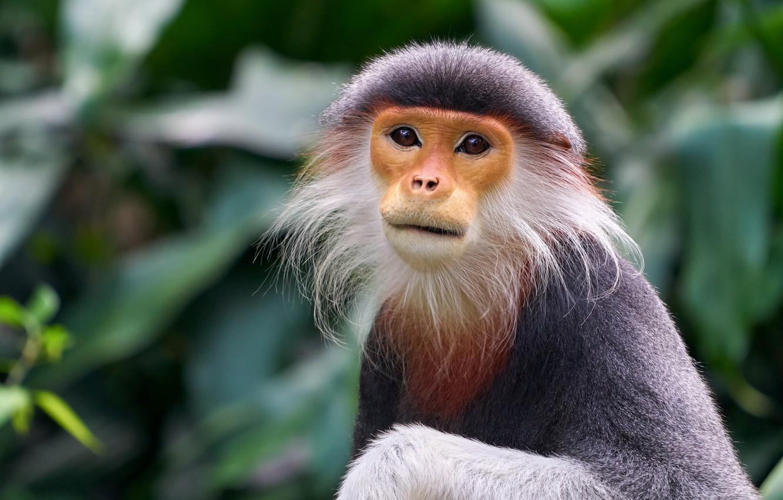Photo wallpaper eyes, exotic, monkey
