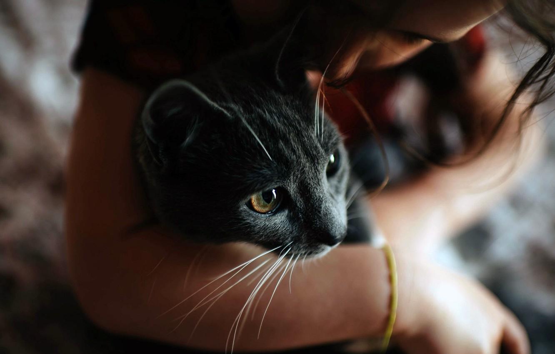 Photo wallpaper girl, photo, cat, mood, hug, bokeh, feeling, Friendship, blurred, fur, portrait, kissing, close up, whiskers, ...