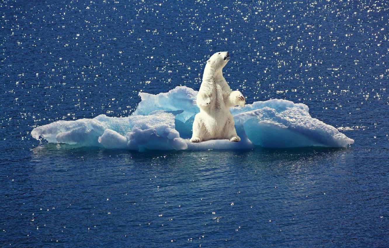 Photo wallpaper water, floe, polar bear, polar bear
