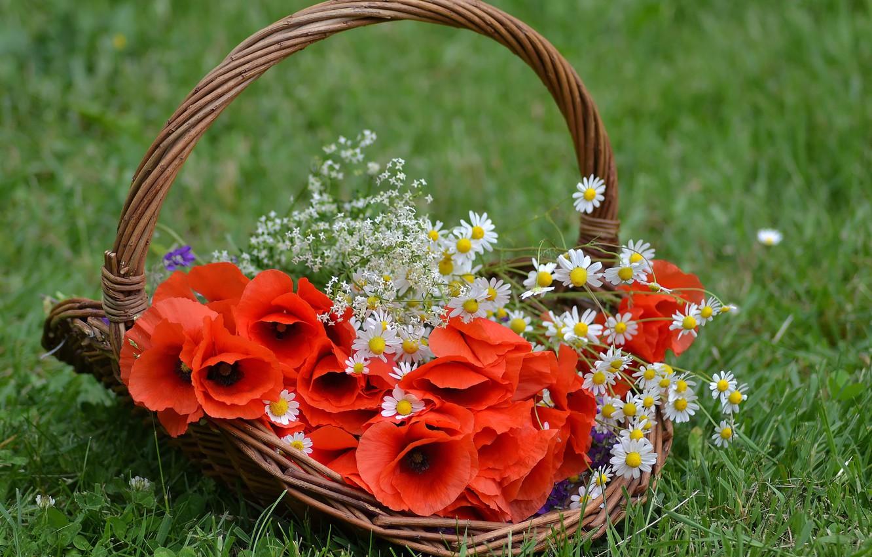 Photo wallpaper grass, Maki, chamomile, basket