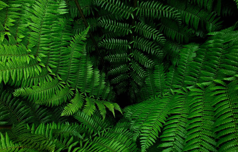 Photo wallpaper greens, leaves, fern